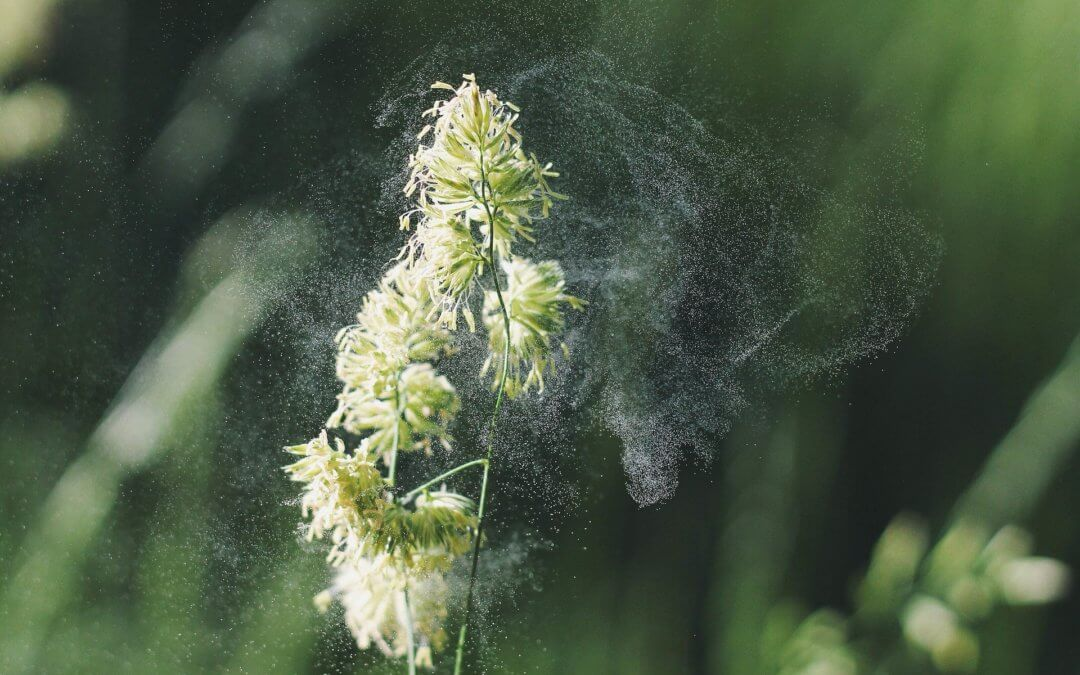 How Air Filtration & Purification Can Help Your Allergies this Spring